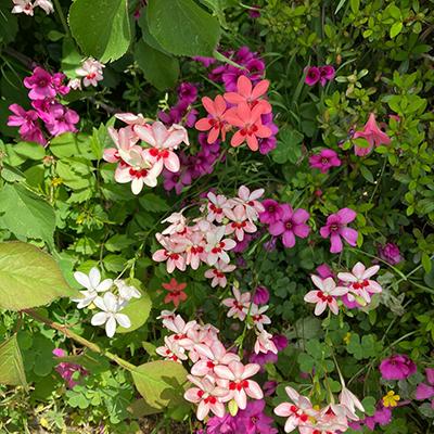 野崎観音墓苑・野崎霊園の日常の写真